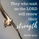 God Will Renew our Strength  {No Matter What Monday}